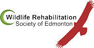 Wildlife Rehabilitation Society of Edmonton